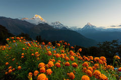 View of Annapurna and Machapuchare peak at Sunrise from Tadapani ,Nepal. Royalty Free Stock Photo