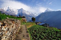 View of Annapurna Mountain with walking path at the foreground. Walking path for villagers and trekkers in Gandruk Village with Annapurna mountain as a backdrop royalty free stock photos