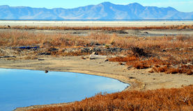 View of Antelope Island Royalty Free Stock Photography