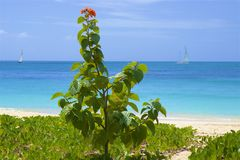 Darkwood beach in Antigua, Caribbean. View of Antigua beach in Antigua, Caribbean stock image