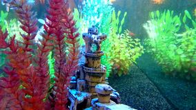 View into an aquarium with floating Goldfish. Close-up view into a freshwater aquarium with floating Goldfish. In aquarium are underwater plants and shipwreck stock video