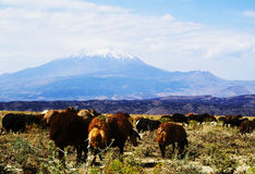 View on Ararat from Turkey. View from Ararat mountain on Turkey side Royalty Free Stock Photo