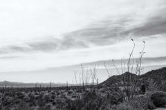 View of the Arizona - Sonaran Desert and the Mountains Beyond in Royalty Free Stock Photography