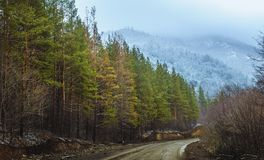 Firs on the way to the mountains. This view is in Armenia, Lori region. I took this shot in the winter Royalty Free Stock Image