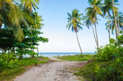 View of arrival on the beach with blue sky, sea on the horizon, coconut trees, green vegetation and a small dirt road. View of arrival on the beach with blue stock image
