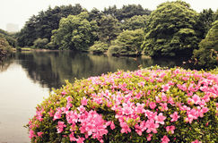 View of artificial lake and azalea Stock Photography