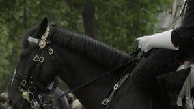Royal guard horse chews at bridle bit. View as Royal guard horse chews at bridle bit stock video