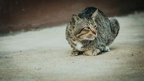 View from asian short hair cat sit and blink eye on sand floor w. Ith soft focus background royalty free stock images