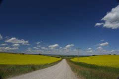 View of asphalt road in beautiful green field with blue sky. During autumn Stock Photos