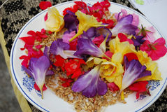 View of an assortment of edible flowers with plate Stock Photo