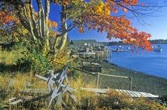 View of Autumn coastline in New Harbor, ME Stock Photo