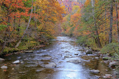 River in the Smoky Mountains Royalty Free Stock Image