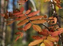 View of autumn European forest Stock Images