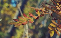 View of autumn European forest Royalty Free Stock Images
