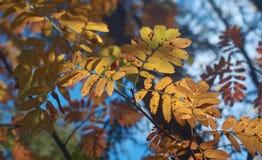 View of autumn European forest Stock Photo