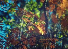 View of autumn European forest Royalty Free Stock Image