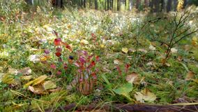 View of autumn European forest stock video