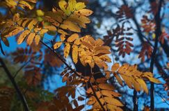 View of autumn European forest Stock Photography