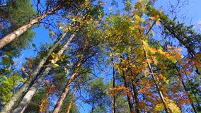 View of autumn European forest stock video footage