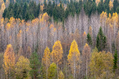 View of the autumn forest Royalty Free Stock Images