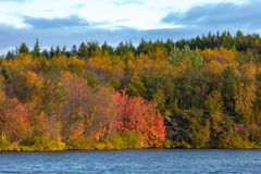 View of the autumn forest and the surface of the lake. Beautiful autumn landscape with water and bright vegetation. Iceland. Europ. E e stock images