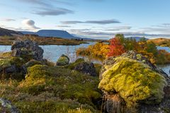 View of the autumn forest and the surface of the lake. Beautiful autumn landscape with water and bright vegetation. Iceland. Europ. E e royalty free stock photos