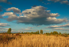 View of autumn landscape meadow with tall grass. Royalty Free Stock Image