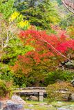 View of the autumn landscape in the park, Kyoto, Japan. Copy space for text. Vertical. View of the autumn landscape in the park, Kyoto, Japan. Copy space for royalty free stock image