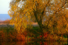 View on autumn landscape of river and trees in sunny day Royalty Free Stock Photo
