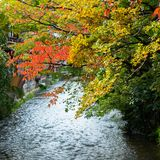 View of autumn leaves against the background of the river in Kyoto, Japan. Copy space for text. View of autumn leaves against the background of the river in Royalty Free Stock Photography