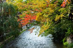 View of autumn leaves against the background of the river in Kyoto, Japan. Copy space for text. View of autumn leaves against the background of the river in Royalty Free Stock Images