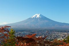 View of autumn leaves and Mt. Fuji. Morning sakura`s autumn leaves and Mt. Fuji are beautiful stock photography