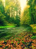 View into autumn mountain river with blurred waves,, fresh green mossy stones and boulders on river bank covered with colorful lea Royalty Free Stock Image