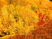View of autumn nature from a height/ stock photography