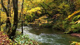 View of autumn at Oirase Gorge