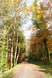 View on the autumn park Stock Photos