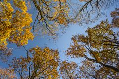 View of the autumn trees. With yellow leaves in a beautiful blue sky royalty free stock photography