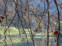 View through autumnal branches on a pond. Beautiful autumnal light mood, beautiful autumn day in the park stock photography