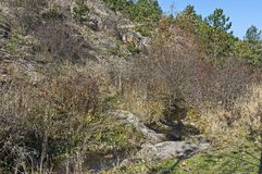 View of autumnal forest and river Lokorska in Balkan mountain Stock Photos