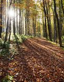 View from autumnal hardwood forest - european beechs Royalty Free Stock Images