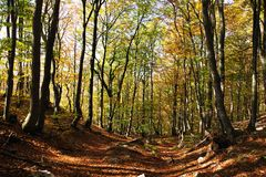 View from autumnal hardwood forest - european beechs Stock Images