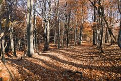 View from autumnal hardwood forest - european beechs Stock Photography