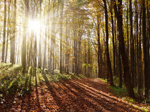 View from autumnal hardwood forest with sun beam Royalty Free Stock Photos