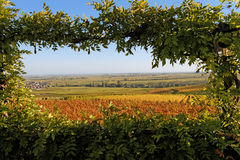 View of autumnal vineyards. Autumnal view of vineyards in Rhineland Palatinate, Germany Royalty Free Stock Photos