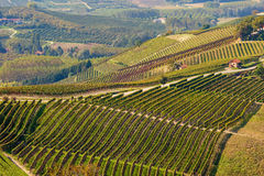 View on autumnal vineyards in Italy. Stock Image