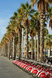 View on an avenue of palm trees. Stock Photos