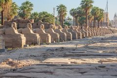 View of the Avenue of the Sphinxes. Connecting the Temple of Luxor with the Temple of Karnak royalty free stock photo