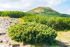 View from Babia Gora or Babi Hora, the highest summit in Beskids mountains in Poland and Slovakia border royalty free stock image