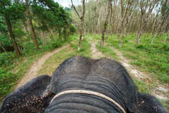 View from back of elephant on tropical forest Royalty Free Stock Image