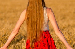 View from the back of the girl with long hair in a wheat field Royalty Free Stock Photo
